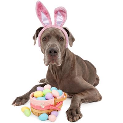 Bunny Pet Image 1